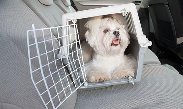 Transport de votre animal chez le vétérinaire